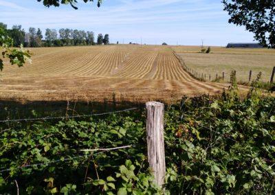 Rouissage du lin à Maillen (Sud de Namur)